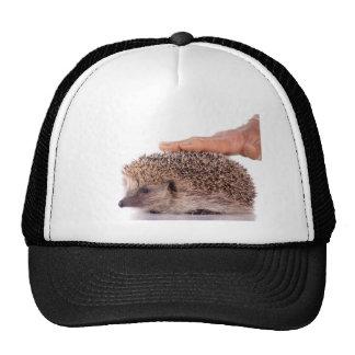 Hedgehog, Trucker Hat