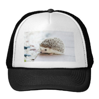 Hedgehog Trucker Hat