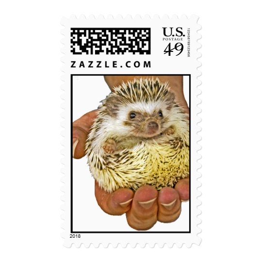 Hedgehog US Postage Stamp