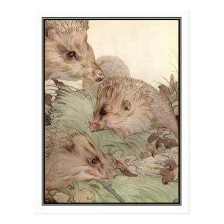 Hedgehogs by E. J. Detmold Postcard