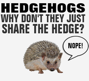 35a6ffc20 HEDGEHOGS WHY DON'T THEY JUST SHARE THE HEDGE? T-Shirt