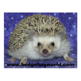 hedgehogworld postcard