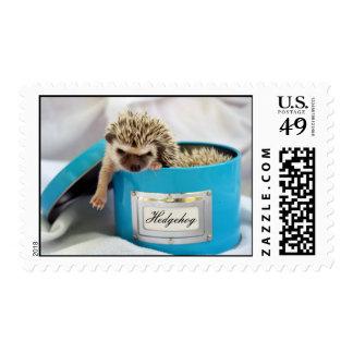 Hedgie en una caja sellos postales