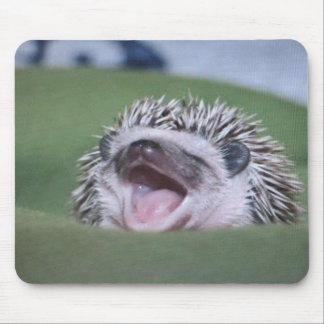 hedgy mouse pad