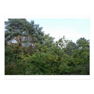 Hednesford Hills Postcard