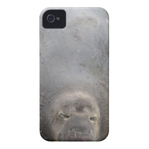 Hedonismo iPhone 4 Cárcasa