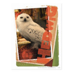 Hedwig 1 post card