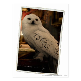 Hedwig 3 postcard