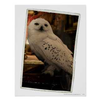 Hedwig 3 poster