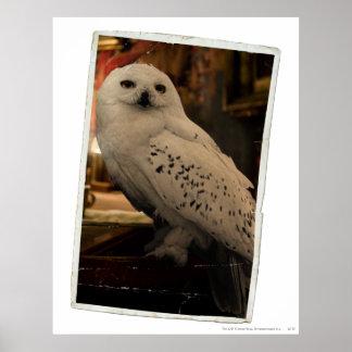 Hedwig 3 póster