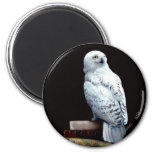 Hedwig on books 2 inch round magnet