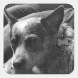 Heeler in black and white square sticker