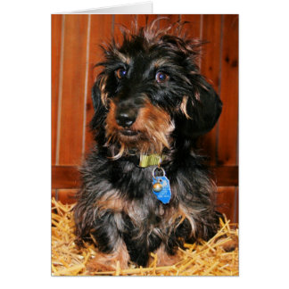 Hefner - Dachshund - Photo-7 Card