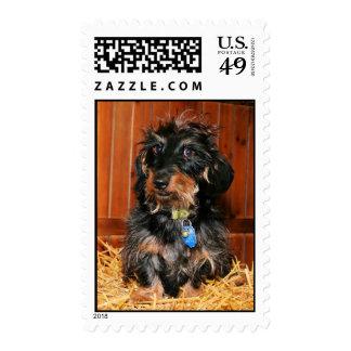 Hefner - Dachshund - Photo-7 Postage Stamp