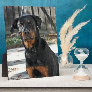 Heidi Rottweiler Backyard Photo Plaque