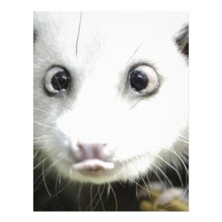 Heidi The Cross Eyed Opossum Personalized Letterhead