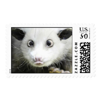 Heidi The Cross Eyed Opossum Postage