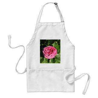 Heirloom Hybrid Tea Rose 027 Adult Apron