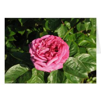 Heirloom Hybrid Tea Rose 027 Card
