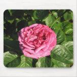 Heirloom Hybrid Tea Rose 027 Mouse Pads