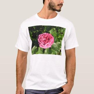 Heirloom Hybrid Tea Rose 027 T-Shirt