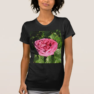 Heirloom Hybrid Tea Rose 027 T-Shirt