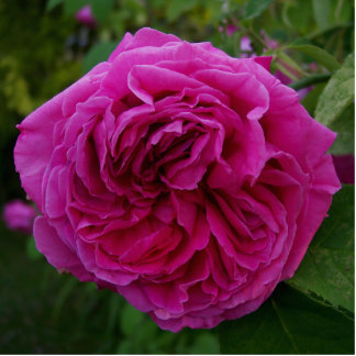 Heirloom Rose Statuette