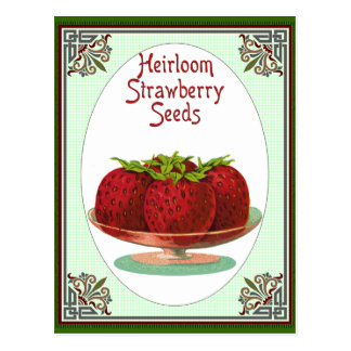 Heirloom Strawberry Seeds Postcard