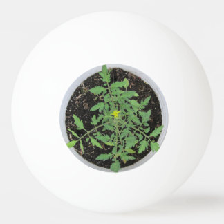 Heirloom Tomato Plant Peace Sign Ping Pong Balls
