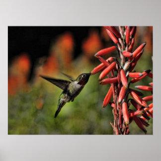 Helaine s Hummingbird 2 Print