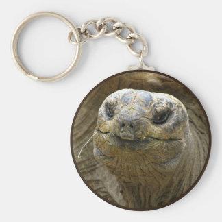 Helaine's Aldabra Tortoise Keychain