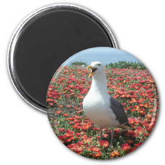 Helaine's Anacapa Island Seagull 2 Inch Round Magnet