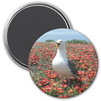 Helaine's Anacapa Island Seagull 3 Inch Round Magnet