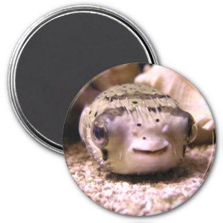 Helaine's Blowfish Pufferfish 3 Inch Round Magnet