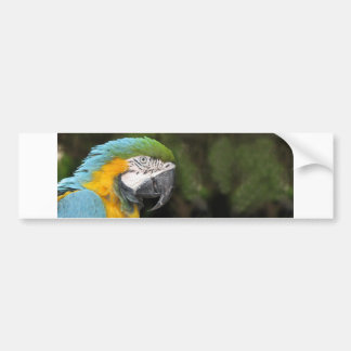 Helaine's Blue Orange Parrot Bumper Sticker
