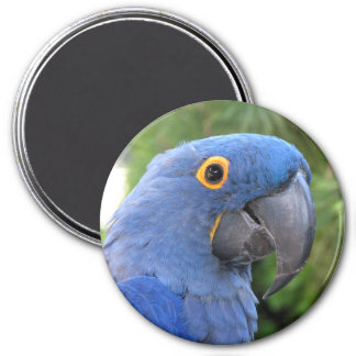 Helaine's Blue Parrot 3 Inch Round Magnet
