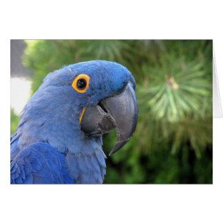 Helaine's Blue Parrot Card