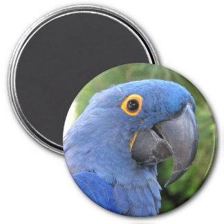 Helaine's Blue Parrot Fridge Magnets