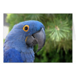 Helaine's Blue Parrot Greeting Card