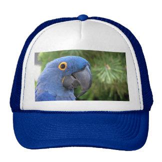 Helaine's Blue Parrot Hat