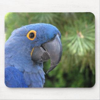 Helaine's Blue Parrot Mousepads