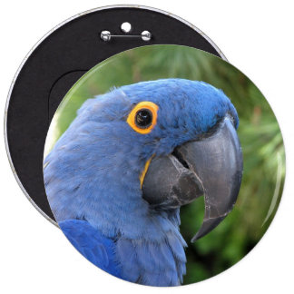 Helaine's Blue Parrot Pinback Buttons