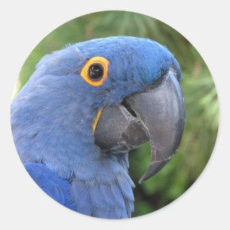 Helaine's Blue Parrot Round Sticker