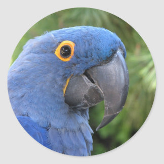 Helaine's Blue Parrot Round Stickers