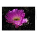 Helaine's Cactus Flower Greeting Card