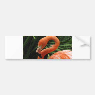 Helaine's Flamingo Bumper Sticker