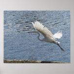 Helaine's Flying Egret Posters