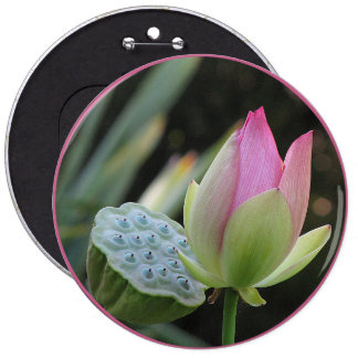 Helaine's Lotus Pinback Buttons