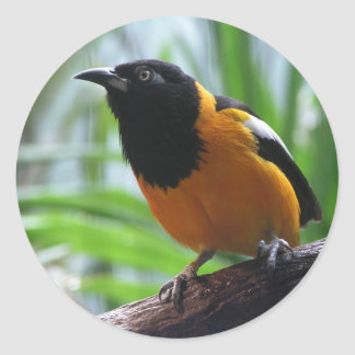 Helaine's Oriole Classic Round Sticker