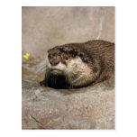 Helaine's Otter Post Card